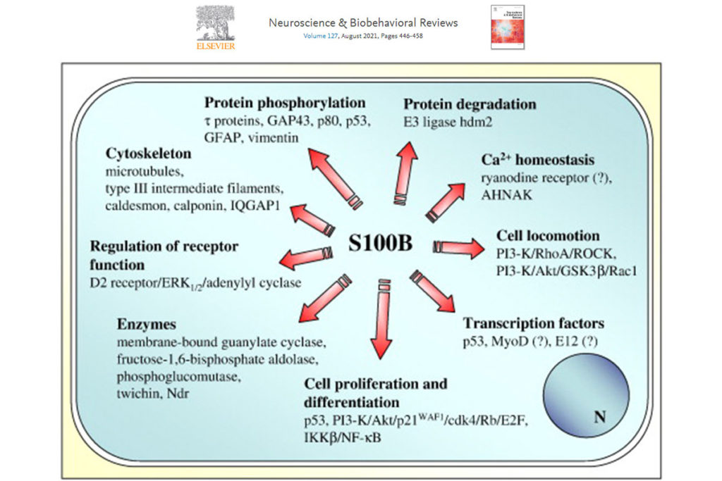 Growing role of S100B protein
